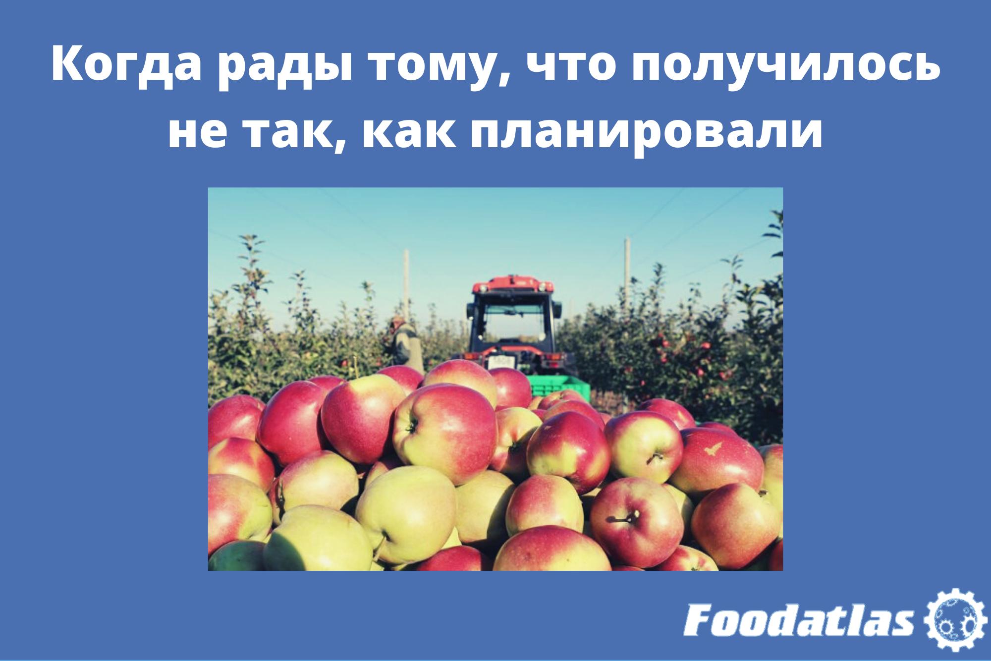 Урожайность в «Садах Белогорья» превысила прогнозы в полтора раза