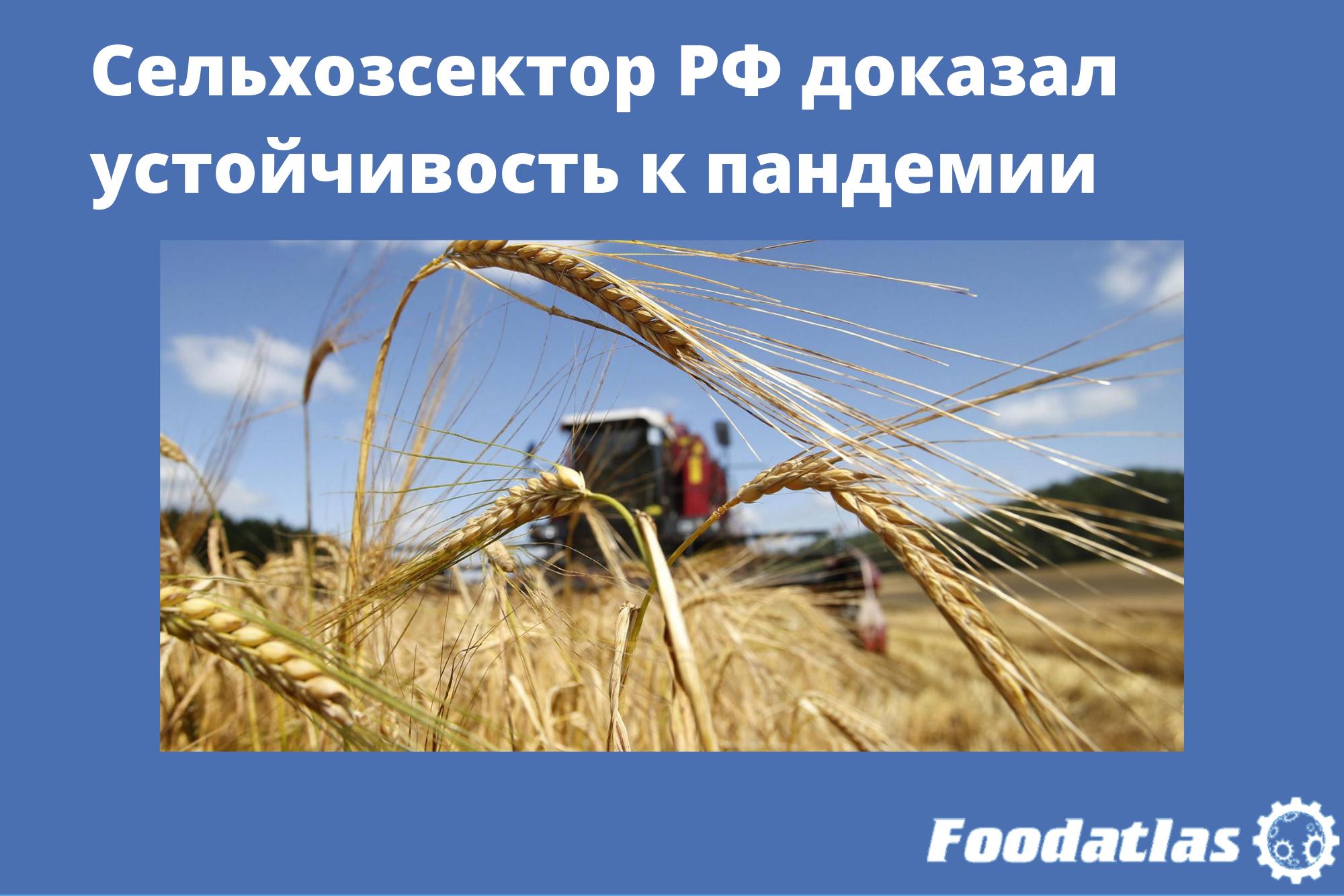 Сельхозсектор РФ доказал устойчивость к пандемии